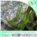 chino a base de hierbas de la medicina o lycopodiopsida club moss en polvo
