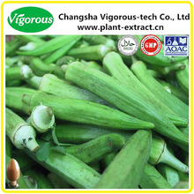 5:1~20:1 pure natural okra extract supplier/okra extract powder/okra extract