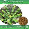 NutraMax Supply-Agathosma Betulina P.E./Agathosma Betulina P.E. 5:1/Natural Agathosma Betulina P.E.