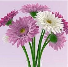 SJ AF017 Factory price cheap single artificial mum daisy artificial flower for woman decoration festival artificial daisy flower