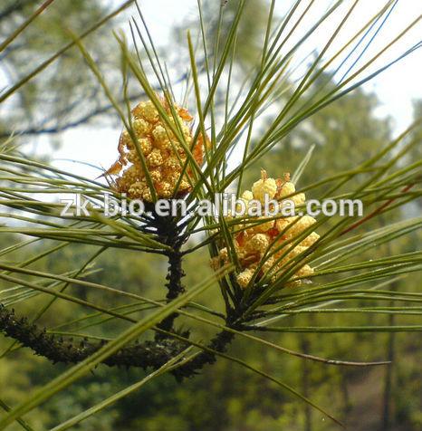 Pinus Massoniana Pollen Pinus Massoniana Lamb Pine