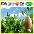 2014 hochwertige 10:1 20:1 Alfalfa-Extrakt/Alfalfa-Extrakt/Alfalfa saatgut p. E.
