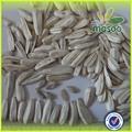 exportação para a rússia e a turquia sementes de girassol branco sementes
