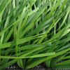 Zhejiang's best synthetic grass for sports field