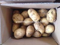 2014 Chinese planting fresh potato price per ton (shandong)