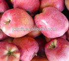 Fresh honey crisp apple fruit supplier from China