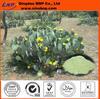 Pure Natural Cactus Extract & Caralluma Fimbriata Extract