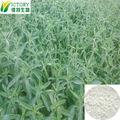 Fornecimento de fábrica 100% natural stevia extrato de folha de efeitos colaterais