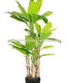 China proveedor/guangzhou plantas y árboles artificiales/artificial decoración para el hogar de los árboles de plátano
