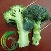 2014 Fresh Broccoli China Supplier