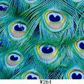 Belle des plumes de paon de transfert d'eau d'impression hydrographiques film coloré