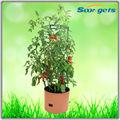 Compras on-line de plástico preto vasos para plantas de viveiro