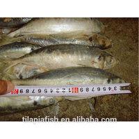 African fish wholesale distributor