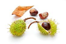 Horse chestnut extract Aescin&Escin