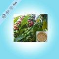 Verde chicco di caffè estratto in polvere/acido clorogenico/estratto della pianta