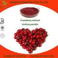 100% natural de extracto de arándano rojo