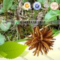 erbe medicina cinese cordyceps