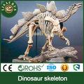 Lisaurus- l 2014 nuevo diseño de los productos estrella de tamaño de la vida de esqueleto de dinosaurio modelo para la exposición