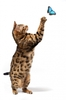 custom real looking jumping simulation model of the stuffed plush bengal cat toy