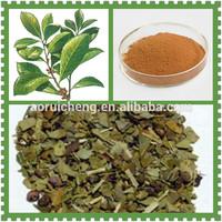 Natural Yerba Mate Tea Extract Powder