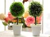 2012 Hot Sale Artificial Milan grass Plant