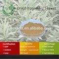 Alecrim / extrato de Rosemary / alecrim seco folhas