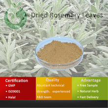 Rosemary/Rosemary Extract/Dried Rosemary Leaves