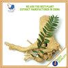 Pure natural aphrodisiac herbs Tongkat Ali Extract