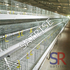 automatic chicken egg laying cages system