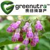 100% Natural Gromwell Root Extract Powder/lithospermum erythrorhizon extract