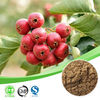 high quality hawthorn berry extract /hawthorn fruit extraction powder / hawthorn leave extract