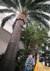 large artificial outdoor decorative palm trees plastic palm