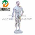 Bix-y1011 de acupuntura del cuerpo modelo( en chino)( 26cm)