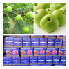 New crop names all fruits fresh green apple gala apple for exporting to market dubai