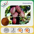 Las ventas caliente chino extracto de la hierba alta calidad 10% teobromina harina de cacao