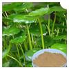 /product-gs/natural-asiaticoside-powder-centella-asiatica-extract-1920668187.html