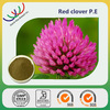 Chinese herb extract best price 40% isoflavones red clover extract