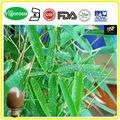 10: 1,10% bamoboo flavonas extrato, bambu extrato de folhas, pó de bambu