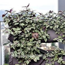 alimentazione modulare di parete verde verticale esterno muro fioriera
