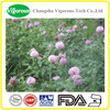 red clover powder extracts/ red clover plant extract powder/ high quality red clover extract powder