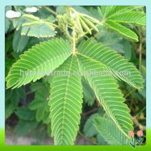 Sensitive Plant Extract/Natural Sensitive Plant Extract/Mimosine Sensitive Plant Extract