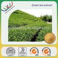 libre de la muestra del fabricante del gmp orgánica extracto de té catequina polifenoles egcg china té de hierbas