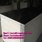 4x8 black film faced plywood , brown film laminated wooden panel , construction shuttering plywood