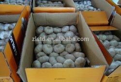 Jinxiang 2014 crop fresh garlic