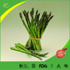 Manufacture offer Natural Asparagus Rhizome Extract