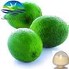 100% Natural Lemon Powder/Fresh Lemon Extract for Health