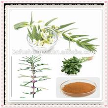 motherwort extract stachydrine hydrochloride/high quality motherwort herb p.e/natural motherwort herb p.e