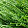new Zhejiang's football turf artificial grass