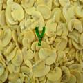 Vegetais frescos de cogumelo fresco fábrica com HALAL