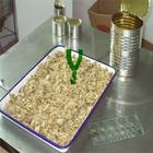 Major food products of China salt mushroom of canned mushroom stems and pieces